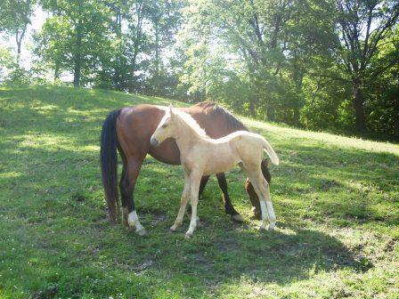 April and her filly