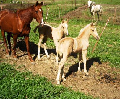 2012 foals