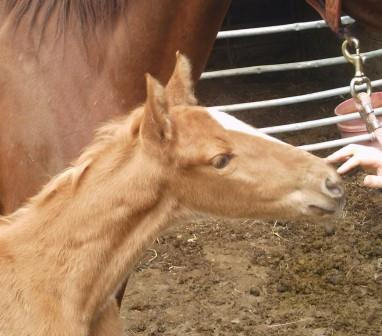 It's a filly